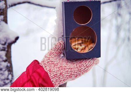 Winter Feeder In The Snow With Bread For Birds And Woman Hand. Music Column Converted Into A Feeder