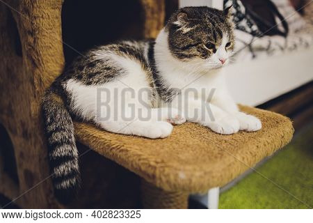 Adorable Tabby Cat Sitting On Kitchen Floor Staring At Camera.