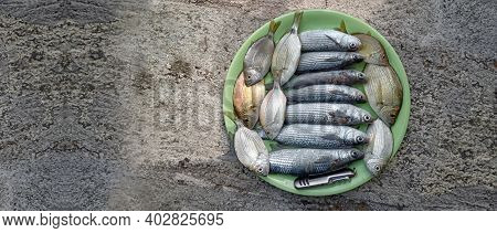 Freshly Caught Fish Are In A Plate On The Concrete Pier.