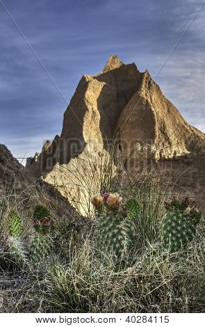 Prickly Pear Cactus And Peaks