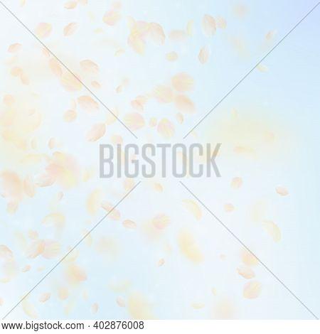 Yellow Orange Flower Petals Falling Down. Grand Romantic Flowers Gradient. Flying Petal On Blue Sky