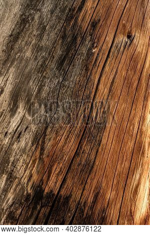 Weathered Wood Texture Shows Where Bark Is Gone In Great Basin National Park