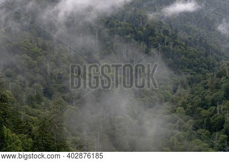 Whisps Of Fog String Through Mountain Forest In Great Smoky Mountain National Park