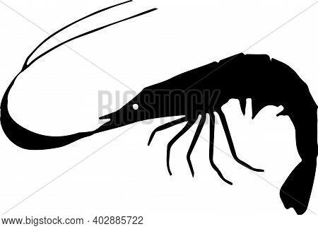 Shrimp Icon Isolated On White Background Sea, Seafood, Shellfish