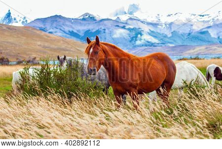 Gorgeous red mustang grazes in the dense grass. Lagoon Azul is an amazing mountain lake near three rocks - torres. The famous Torres del Paine park in southern Chile.
