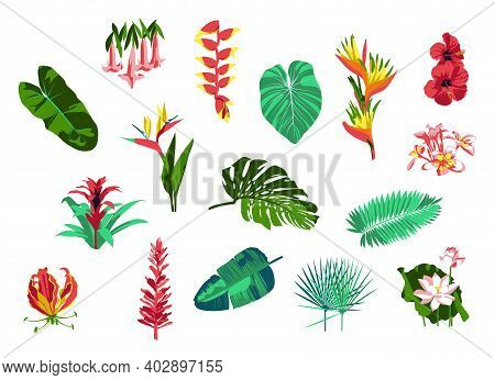 Tropical Plants And Flowers Collection. Exotic Tropical Palm Leaves And Blooming Flowers. Summer Par