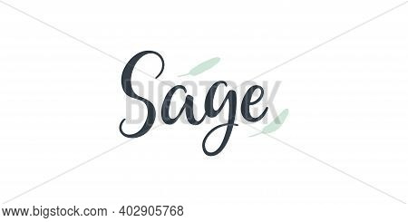 Sage Text Hand Drawn Lettering Isolated On White Background.