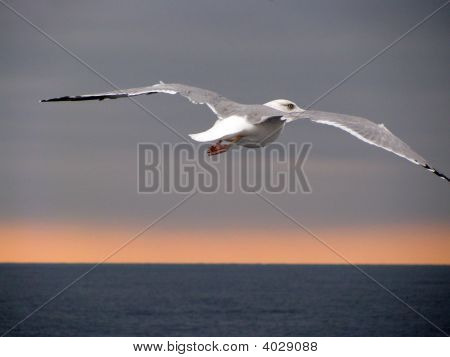 Seagull spreading wings above sea below stormy sky poster