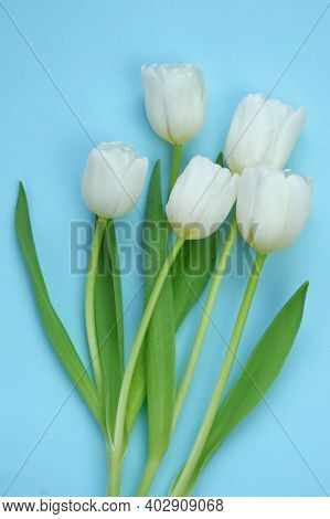 White Tulips Bouquet On A Light Blue Background. White Spring Flowers. Floral Card Blank. Floral Del