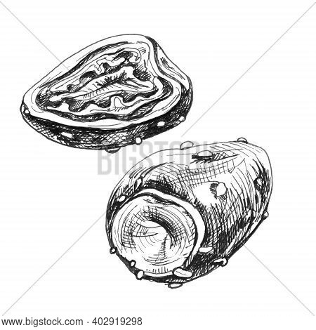 Prickly Pear Slice And Whole. Vector Vintage Hatching Gray Illustration. Isolated On White Backgroun