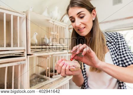 A woman marking a pigeon chick with a bird ribbon
