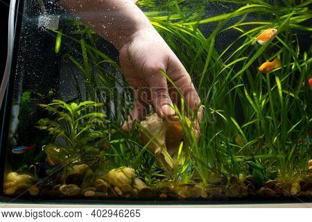 Cleaning And Maintainance In Aquarium. Hand Picking Shell In Aquarium.