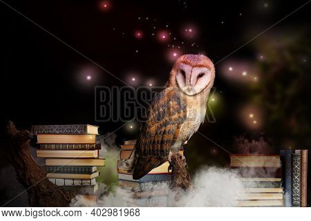Beautiful Wise Owl On Books In Fantasy World