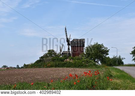 Windmills And Blossom Poppies By Roadside On The Island Oland In Sweden