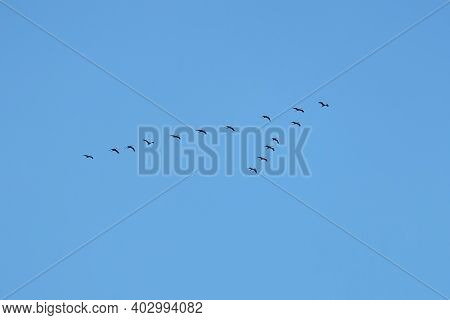 The Contours Of Cranes Flying In A Wedge To The South At The End Of Summer Against The Backdrop Of A