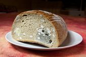 Bread covered in fuzzy green and white mould poster