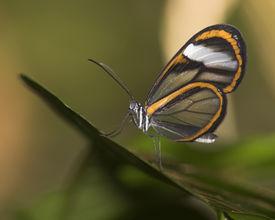 Orange Schmetterling gekippt