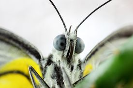 Beautiful Close-up The Butterfly's Eyes
