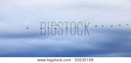 flock of geese flying in formation during migration blue sky poster