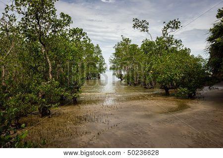 A Mangrove Swamp In Borneo