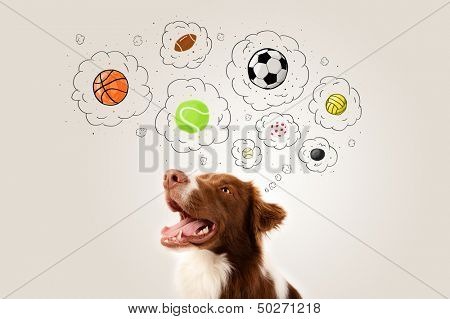 Cute brown and white border collie thinking about balls in a thought bubbles above his head poster