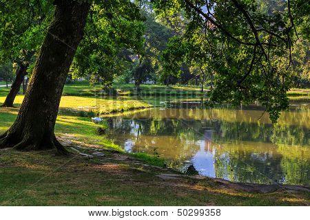 Trees Near A Pond In City Park