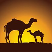 caravan of camels , vector image design poster