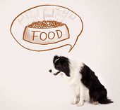 Cute black and white border collie thinking about a bowl of food in a thought bubble above her head poster