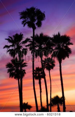 Palm trees under setting sun
