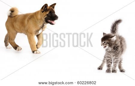 cat scared puppy