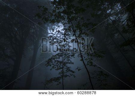 Dense fog in the beechen wood