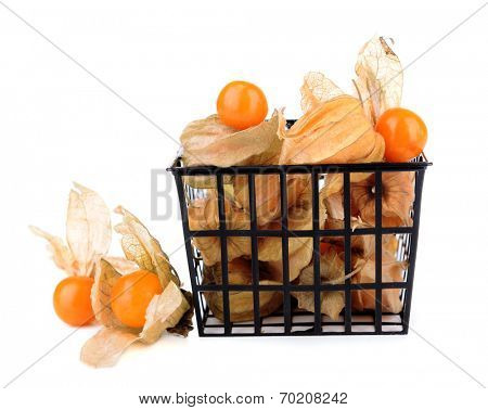 Physalis fruits in plastic basket, isolated on white