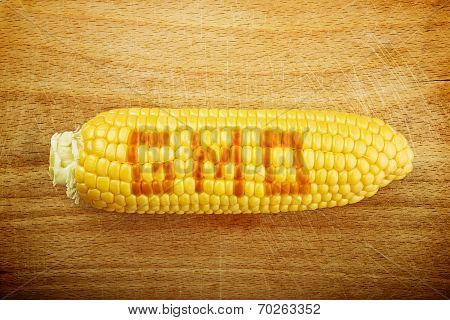 Gmo Corn Maize Cob On Wooden Background