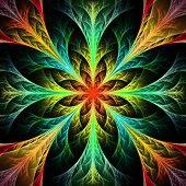 Beautiful multicolor fractal flower. Collection - frosty pattern. On black. poster