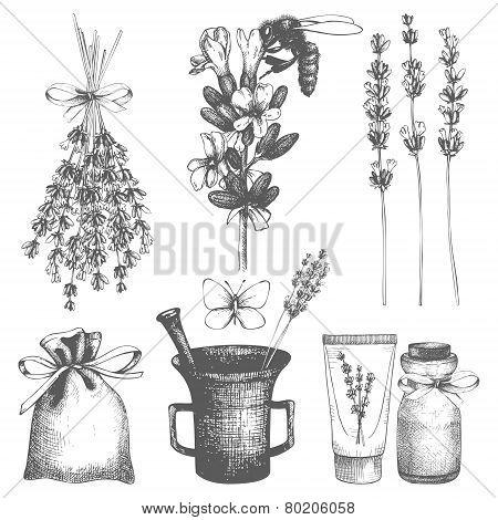 Graphic lavender flowers sketch