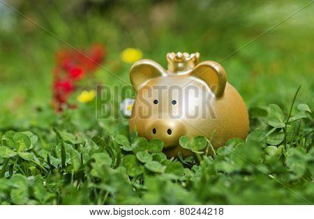 Goldenes Sparschwein Auf Einer Wiese