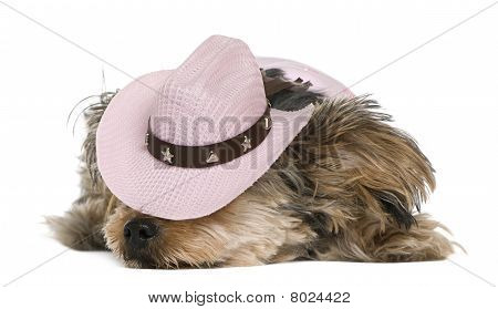 Yorkshire Terrier, 2 Years Old, Dressed And Wearing A Pink Cowboy Hat Lying In Front Of White Backgr