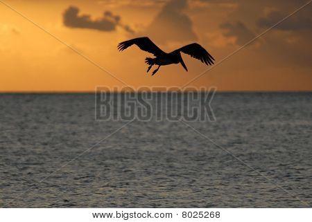 Flying auf den Sonnenuntergang