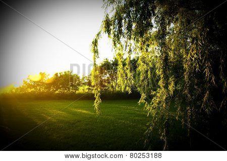 sunset next to tree