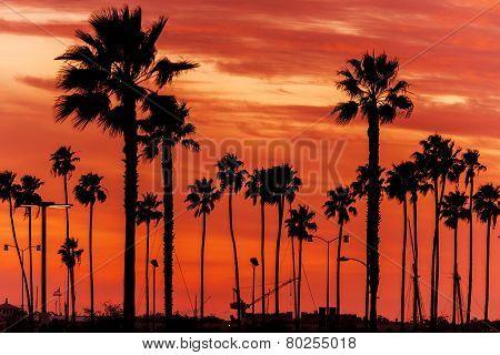 California Sanset Scenery. Reddish Sunset Sky and California Palms. Sunset Background. poster