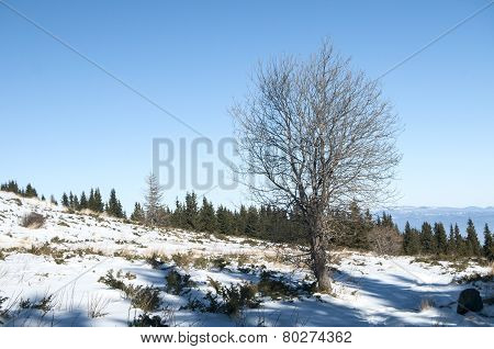 Winter scene with tree on snow