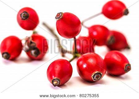 Bunch Of Dogrose. Rosehip