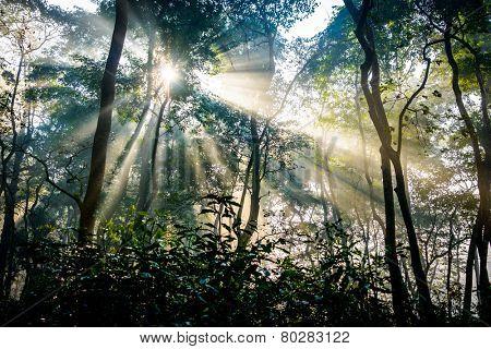 Sunrays passing through trees in Chitwan jungle, Nepal