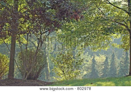 Trees in Late Summer