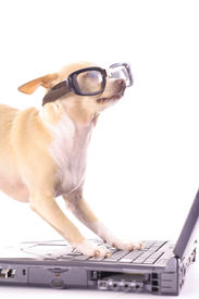 dog on computer reading emails