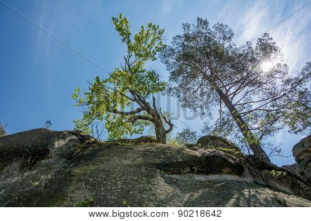 Trees Growing On Top Of The Rock In Sun Rays