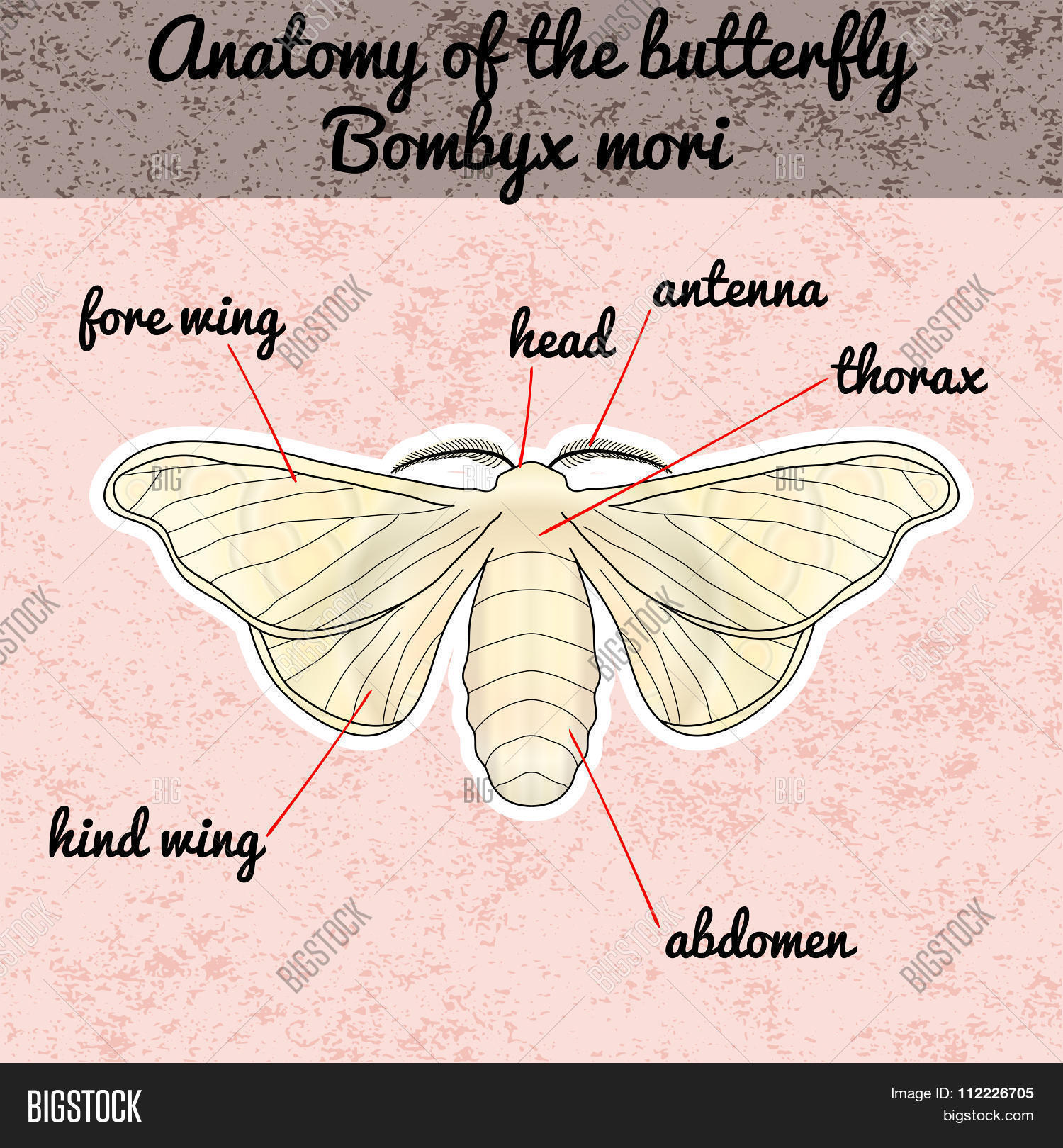 Insect Anatomy. Vector & Photo (Free Trial) | Bigstock