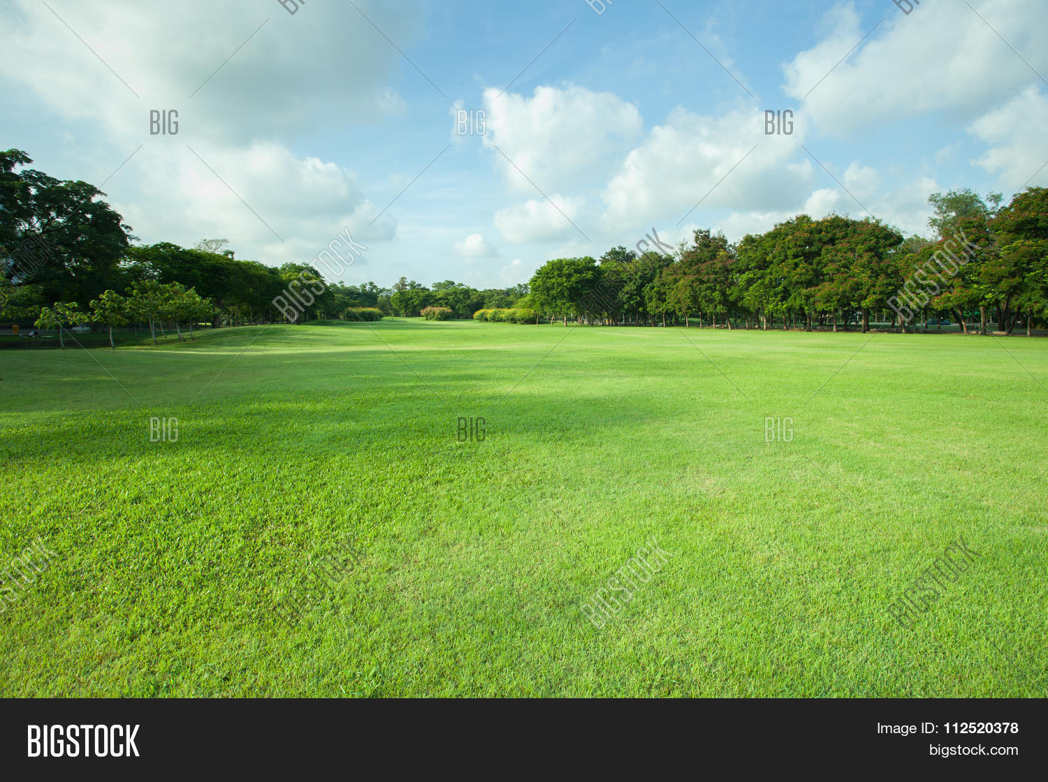 green grass field. Perfect Green Beautiful Morning Light In Public Park With Green Grass Field And  Fresh Tree Plant Perspective For