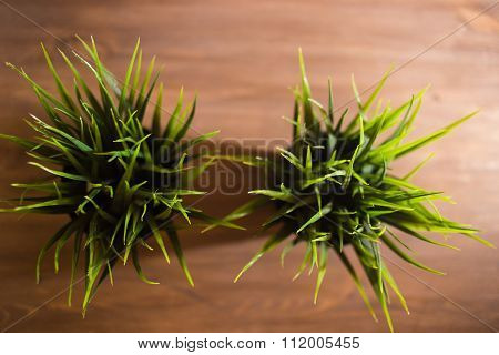 Decorative wheatgrass plant in white flower pot, top view