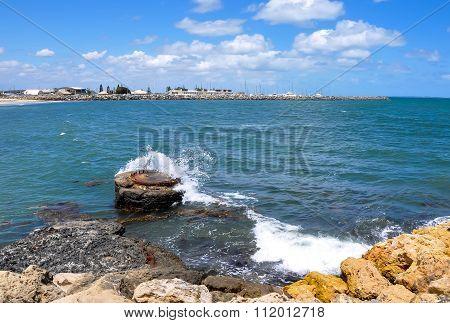 Bather's Beach Buoy: Fremantle, Western Australia